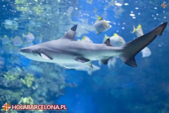 L Aquarium Barcelona